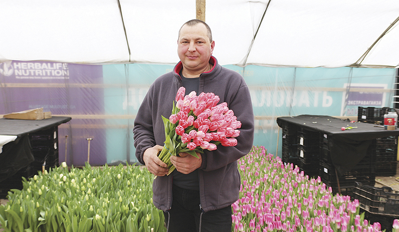 Более 70 000 тюльпанов к 8 марта вырастила семья Колесниковичей из Столина