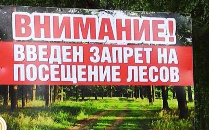 С 14 июня на Столинщине запрещено посещение лесов