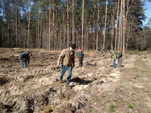 Неделя леса на Столинщине