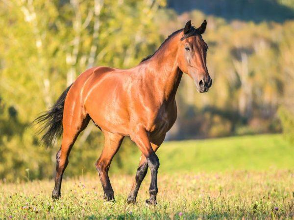 Из первых уст о ситуации факта падежа лошади от сибирской язвы
