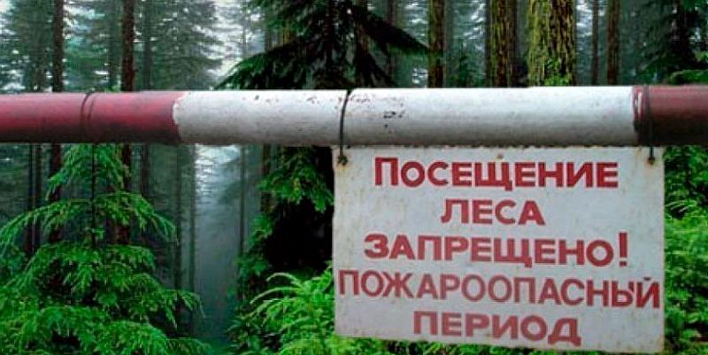 С 25 июня на Столинщине запрещено посещение лесов