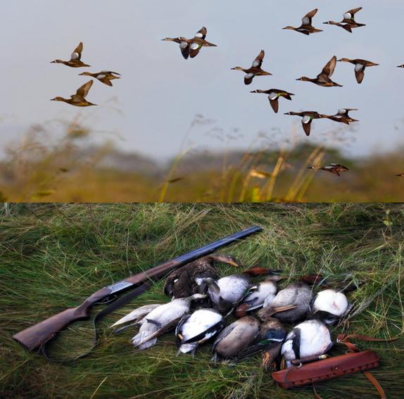 Летне-осенний сезон охоты — помним о правилах
